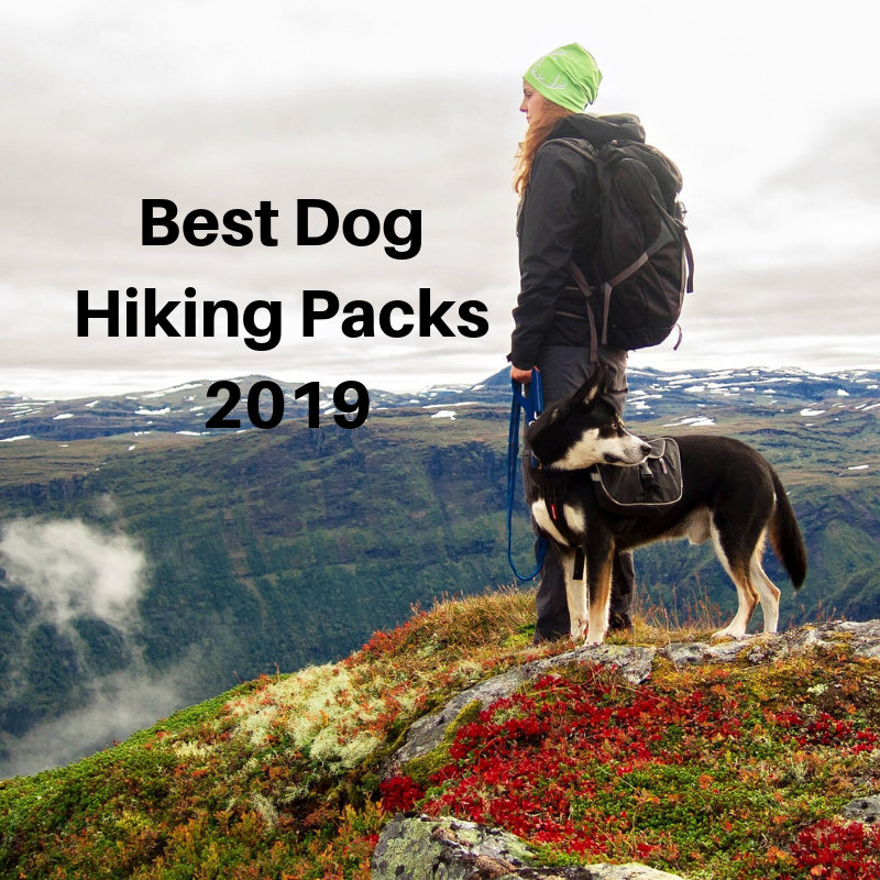 Best Dog Hiking Packs - Complete Buying Guide - YesHiking 31bbaf9ef7b25